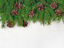 Spruce branch and cones on a white Royalty Free Stock Images