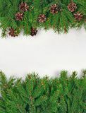 Spruce branch and cones on a white Stock Image