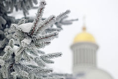 Spruce branch covered with snow. On the background of the church dome Royalty Free Stock Photos