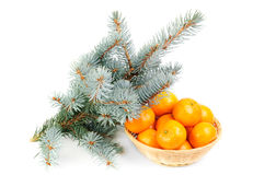Spruce branch and fresh mandarines Royalty Free Stock Images