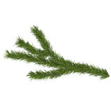 Spruce branch, isolated on white background, 3d render Royalty Free Stock Photos