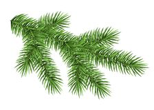 Spruce branch isolated on white background. Green fir. Realistic Christmas tree. Vector illustration for Xmas cards, banners, flyers, New year party posters Royalty Free Stock Image