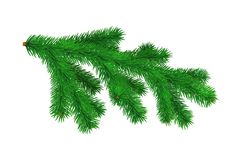 Spruce branch isolated on white background. Vector. Illustration Stock Image