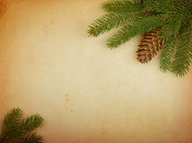 Spruce branch on old paper Royalty Free Stock Images