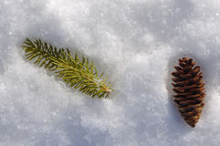 Spruce Branch and Pine Cone Royalty Free Stock Image