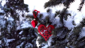 Spruce Branch with Snow and Heart. Sways in the Wind stock video footage
