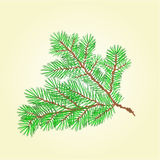 Spruce branch vector. Spruce branch lush conifer  vector illustration Royalty Free Stock Photography