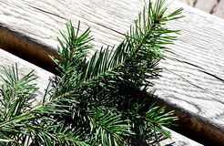 Spruce branch. On a wooden bench stock photo