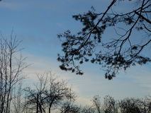 The spruce branches against the sky. Autumn season nature Stock Photo