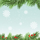 Spruce branches background. Christmas background Stock Images