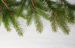 Spruce branches on bleached board Stock Images