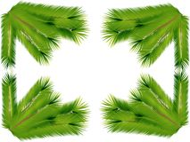 Spruce branches. The branches of the Palmach. Stock Images