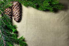 Spruce branches with cones on the background of coarse cloth Stock Photo