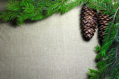 Spruce branches with cones on the background of coarse cloth Stock Image