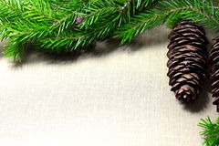 Spruce branches with cones on the background of coarse cloth Stock Images