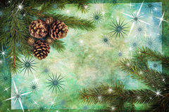Spruce branches with cones Stock Images
