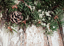 Spruce branches with cones and snow Stock Images