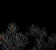 Spruce branches on dark black background Stock Photography