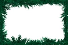 Spruce Branches Framework Royalty Free Stock Images