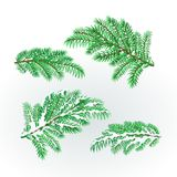 Spruce branches lush conifer autumnal and winter snowy natural background vector illustration editable. Hand draw Stock Photo