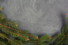 The spruce branches lying on the chalkboard. Christmas tree black background. New Year. Stock Photos