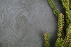 The spruce branches lying on the chalkboard. Christmas tree black background. New Year. Royalty Free Stock Images