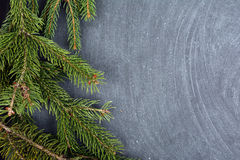 The spruce branches lying on the chalkboard. Christmas tree black background. New Year. Stock Images