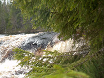 The spruce branches over the river Stock Photography