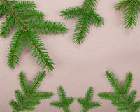 Spruce branches paper texture. For design christmas new year royalty free stock images