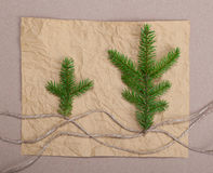 Spruce branches  paper texture. Spruce branches paper texture for design christmas new year royalty free stock image