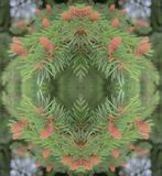 spruce branches pattern stock illustration