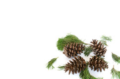 Spruce branches with pine cone border isolated Stock Photo