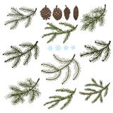 Spruce branches with Pine cones set Stock Images