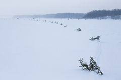 Spruce branches in the snow-covered field Royalty Free Stock Photography
