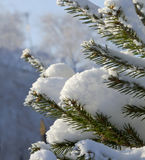 The spruce branches under cap of snow on background of the house Royalty Free Stock Photography