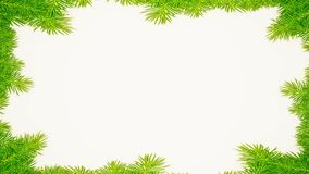 Spruce branches on white background. In background vector illustration