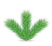 Spruce branches on a white background. Illustration Stock Photo