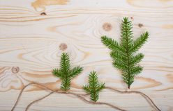 Spruce branches wood texture. For design christmas new year stock photo