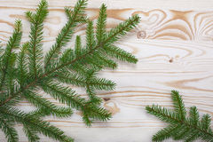 Spruce branches wood texture. For design christmas new year royalty free stock image