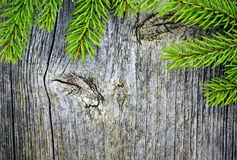 Spruce branches on a wooden plank background Royalty Free Stock Photography