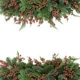 Spruce and Cedar Cypress Border Royalty Free Stock Photo