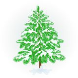 Spruce Christmas tree with snow vintage vector illustration editable. Hand draw Stock Image