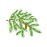 Spruce Christmas tree vector illustration Stock Photography