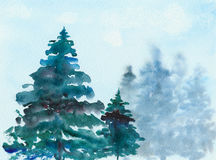 Spruce Christmas trees in the forest, watercolor, illustration. Royalty Free Stock Photo