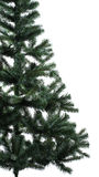 Spruce close-up. White background Stock Images