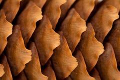 Spruce cone background Stock Photo