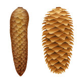 Spruce Cone Open Closed Stock Photos
