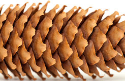 Spruce cones isolated on white Royalty Free Stock Images