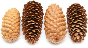 Spruce cones isolated on white Royalty Free Stock Photography