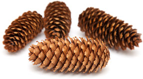 Spruce cones on white stock photos